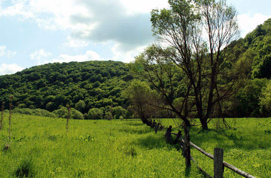 Долина Збруча біля підніжжя Звенигорода