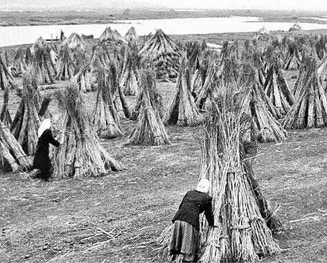 Снопи на полях перед Голодомором